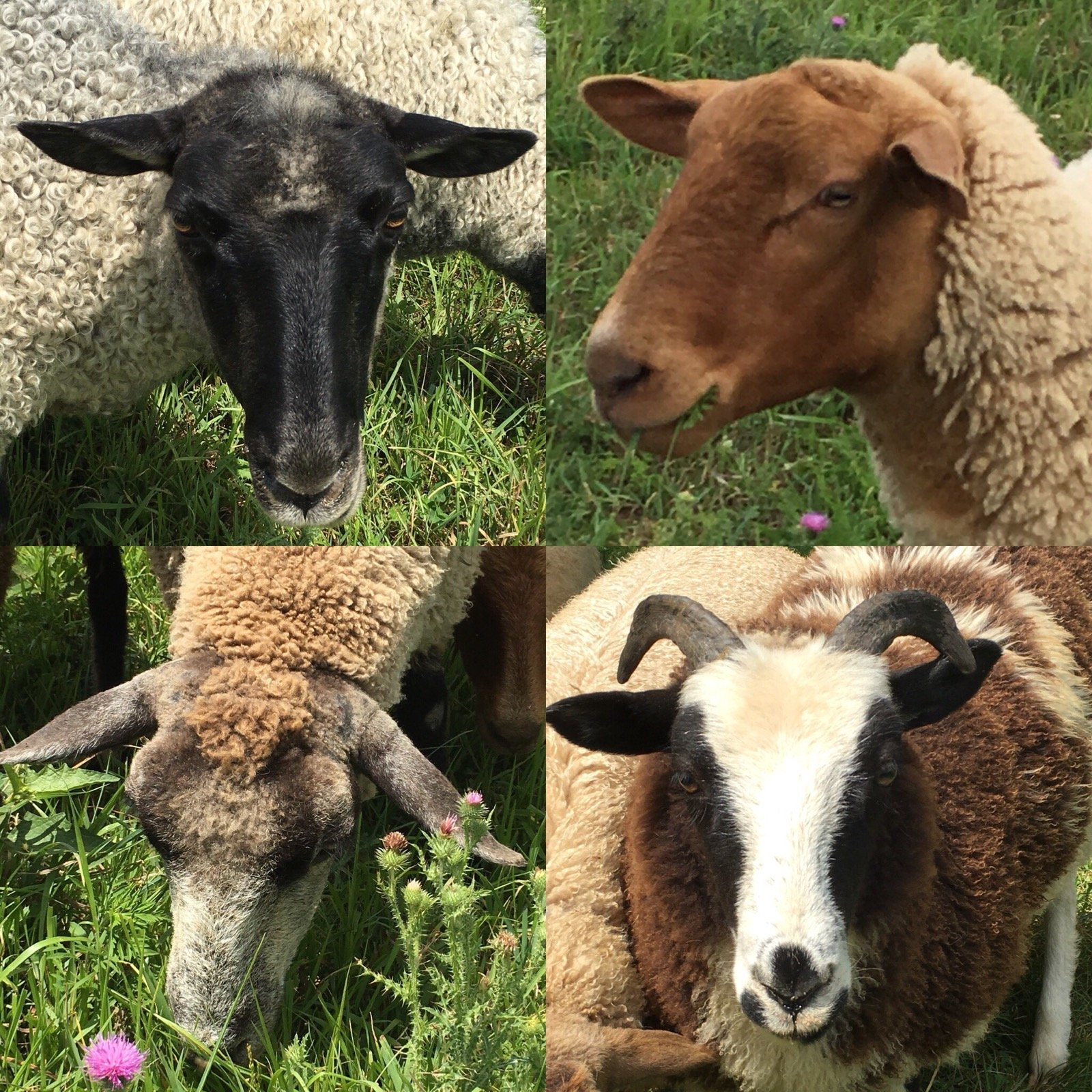 Bluffwood Landing Wool Farm