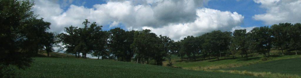 Wisconsin farmland and trees